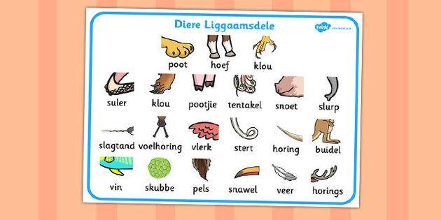 Afrikaans animal bodypart word mat