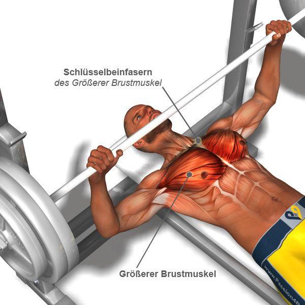 brust übungen, brust training, muskelaufbau