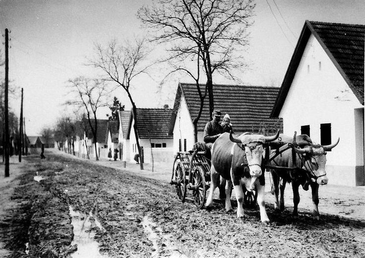 Mözsi utca ökrös szekérrel, 1936.