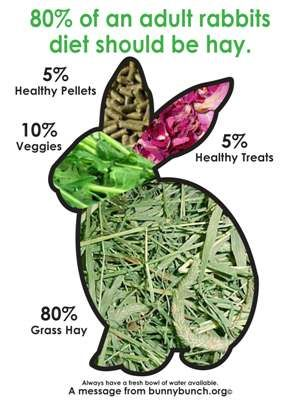 80% of an adult rabbit's diet should be hay. Don't give them raw broccoli... Think we killed a pet rabbit that way.