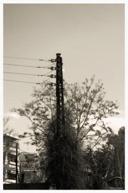 Pole inside a tree