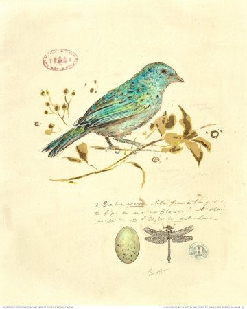 aqua bird, scientific drawing - scientific drawings in study?