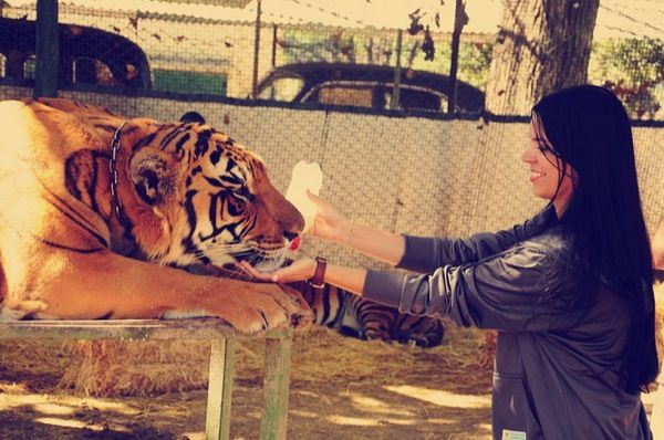 No place will let you get closer to the wildest of wild things than Lujan Zoo in Argentina. Located just outside Buenos Aires, Lujan Zoo provides zoogoers the opportunity to bottle feed a bear, cuddle a tiger, or rub noses with a lion. How awesome!!
