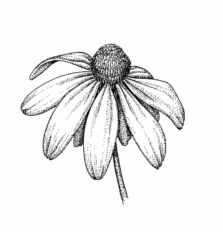 Flower Head Line Drawing : Best flower sketches ideas on pinterest