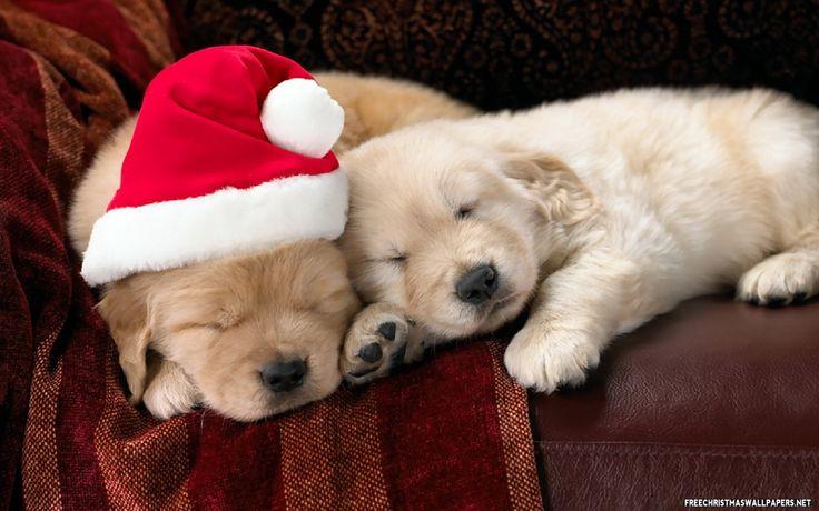 Christmas puppies!
