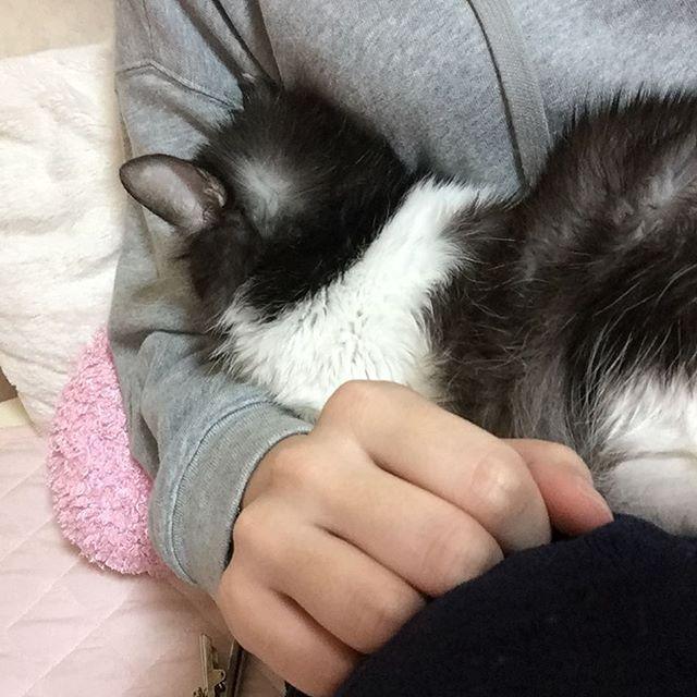 隠れんぼ♡ #愛猫家 #愛猫 #愛犬 #愛犬家 #捨て猫 #元捨て猫 #保護猫 #にゃんすたぐらむ #犬と猫のいる暮らし #黒猫 #ミックス猫 #ヨークシャーテリア#いたずら猫