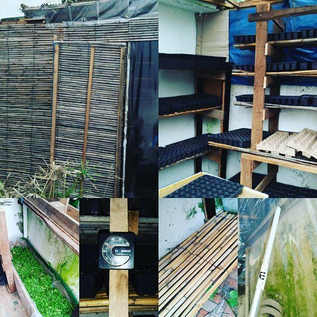#serre à semis de 2m/150 m avec une structure en bois. pour le toit j ai utilisé une bache transparente. pour les côtés des rouleux plastique pour livre. les étagères sont construites avec des palettes et des morceaux de palissade en osier. Pour garder une température ambiante convenable un bac est rempli de tonte de gazon.  seedling #greenhouse of 2m / 1.50 m with a wooden structure. for the roof I used a transparent tarpaulin. for the sides plastic rollers for book. the shelves are built…