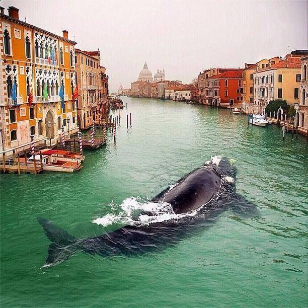 Venatian Whale