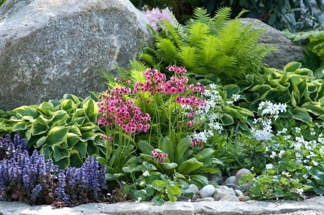Partial Shade Garden Plans A Charming Plant Combination For Shady