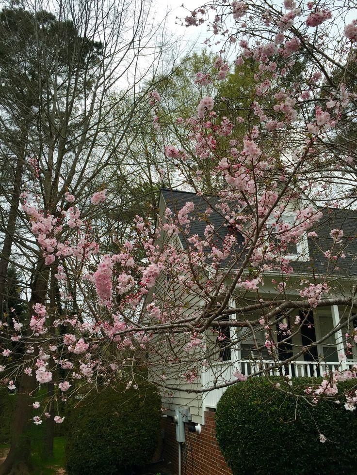 Bahar bir uyanış. Bahar bir yenilenme.. Bir umut.. Ve aslında bahar uçuşan polenler.. Artan alerjiler..  Çiçektozu ve Alerjiler http://www.fuzyonblog.com/2013/02/11/cicektozu-ve-alerjiler/