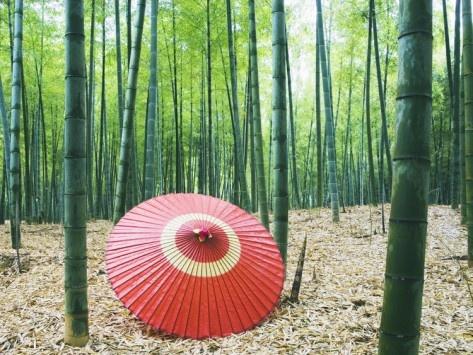 Coarse Oilpaper Umbrella in Bamboo Forest, Muko City, Kyoto Prefecture