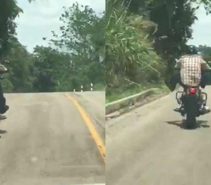 Motociclista é atacado por cobra gigante em estrada