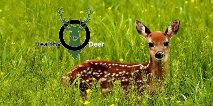 Deer placenta buy Singapore - Services, Health & Medicine, Animal Health - Arab Street, Central Singapore, Singapore 934414