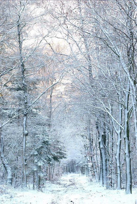 Volop winter in het bos