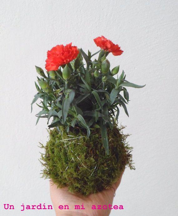 más de 25 bellas ideas sobre cultivo de musgo en pinterest