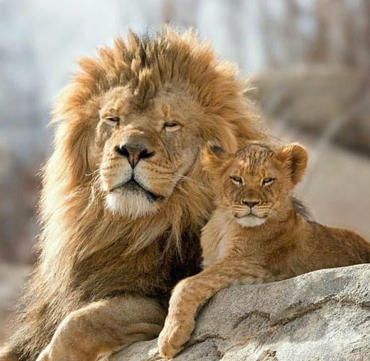 ouai!! mon papa c'est le roi , et moi je suis le prince ...