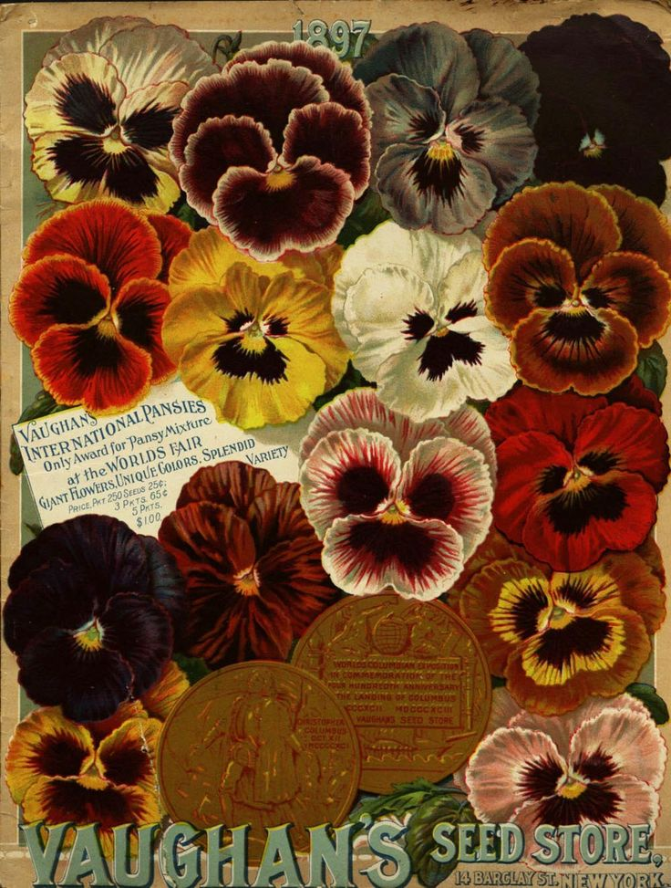 """From the collection at Andersen Horticultural Library. Nursery publications often tout major awards won by that company at world's fairs and other horticultural exhibitions. New York-based Vaughan's Seed Store – winners of """"the only award for pansy mixture at the World's Columbian Exposition"""" in Chicago – issued the above in 1897."""