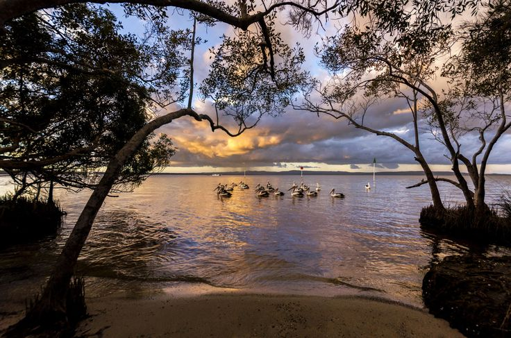 Lake Cootharaba Pelicans by Kate Wall on 500px