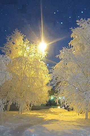 Snowy frosty trees, what a beautiful sight!