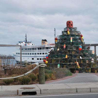 22 Best Thayer Street Images On Pinterest Rhode Island Island  - Christmas Trees Ri