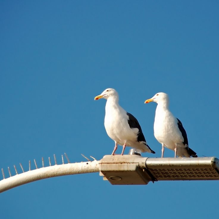 #gullbirds #minimalphotography #minimallove #birds