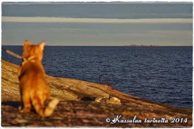 Kassulan tarinoita: Saaressa jälleen / In island