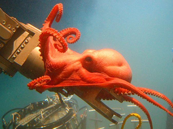 I love the Ocean Portal (Smithsonian Institute)!