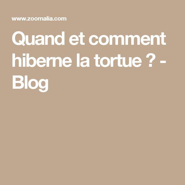 Quand et comment hiberne la tortue ? - Blog