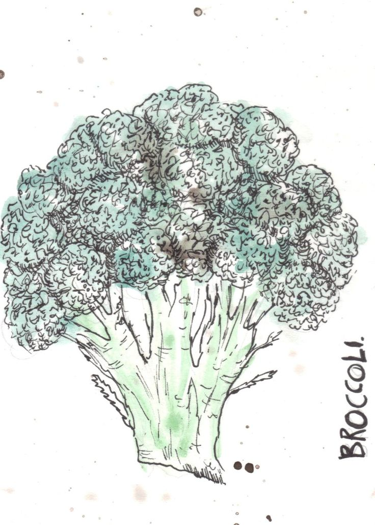 Broccoli water colour paint and fine liner study