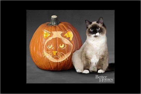 catpumpkincarvingstencils-13_birman-cat