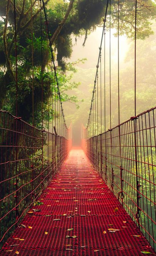 Suspension bridge in the Monteverde Cloud Forest Reserve of Costa Rica • photo: Mikael Kvist on Getty Images