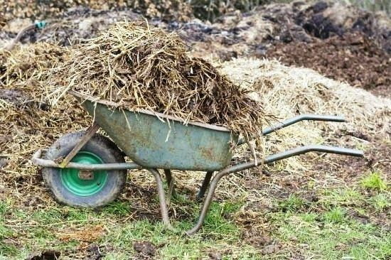 Mulching acts as an insulation to protect your plants from the freezing-thawing-freezing-thawing cycle which may damage roots. Mulching protect plants from winter. It keeps roots warmer much longer.