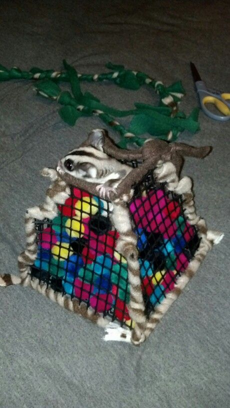Toys For Sugar : Best ideas about sugar glider toys on pinterest