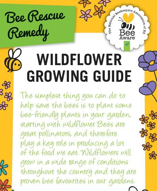 The best thing you can do to save the bees is to plant lots of bee friendly plants. Have a look at our Wildflower Growing Guide!