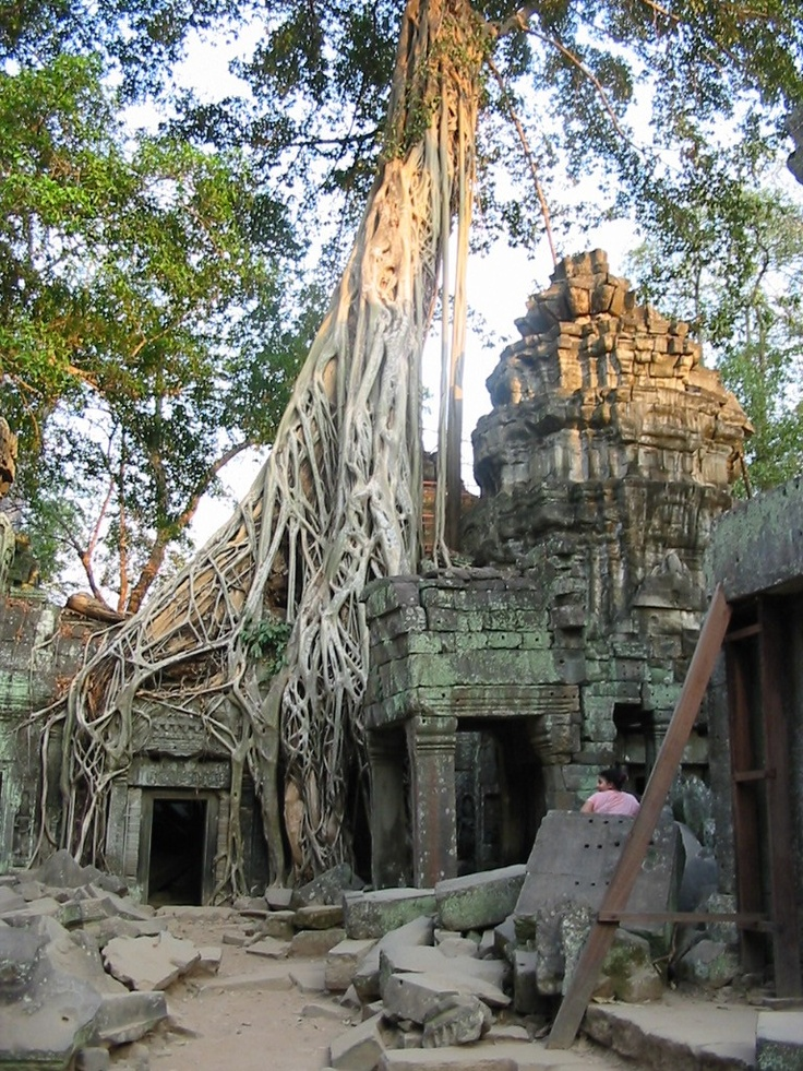 Ta Prohm in the Angkor Wat complex in Cambodia where part of the first Tomb Raider movie was filmed.: Raiders Movie