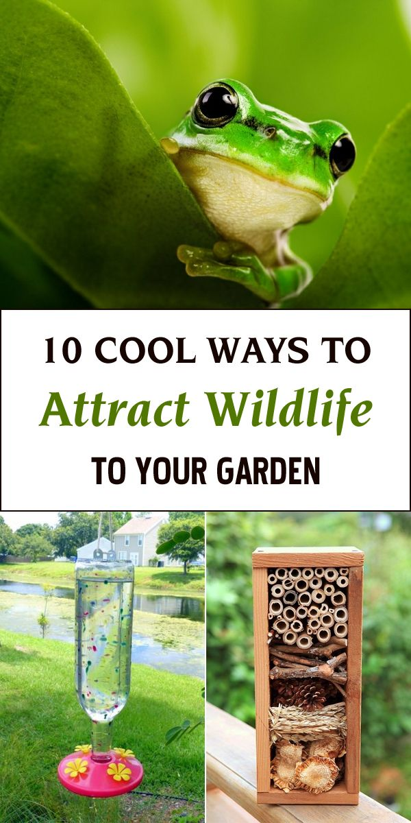 Check out these great ideas on how to attract wildlife to your garden.