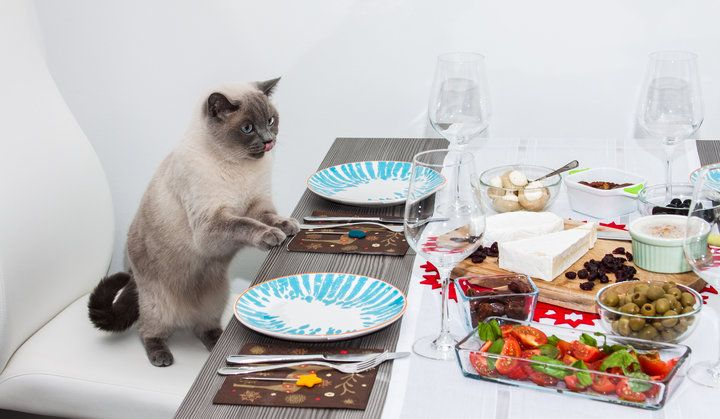 9 Things Cat Owners MUST Do Before Entertaining