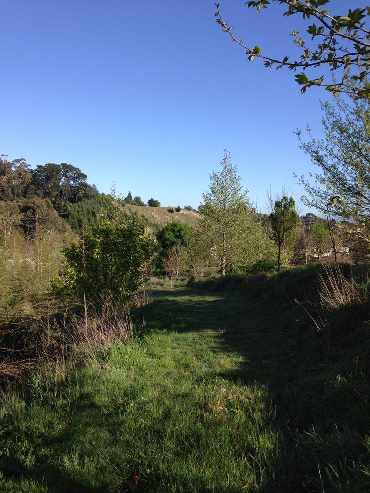 Bridleway through Tauroa Valley