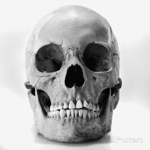 best 20+ human skull anatomy ideas on pinterest | human skull, Skeleton