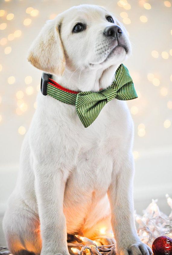 Green Candy Striped Dog Collar