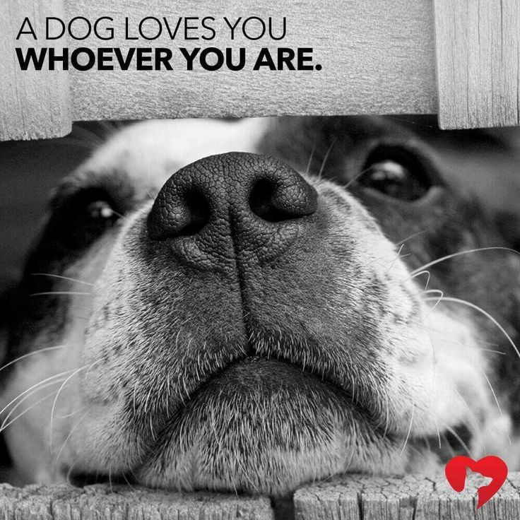 Best Cute Puppies Images On Pinterest Dogs Baby Animals - Cute portraits baby and rescue dog