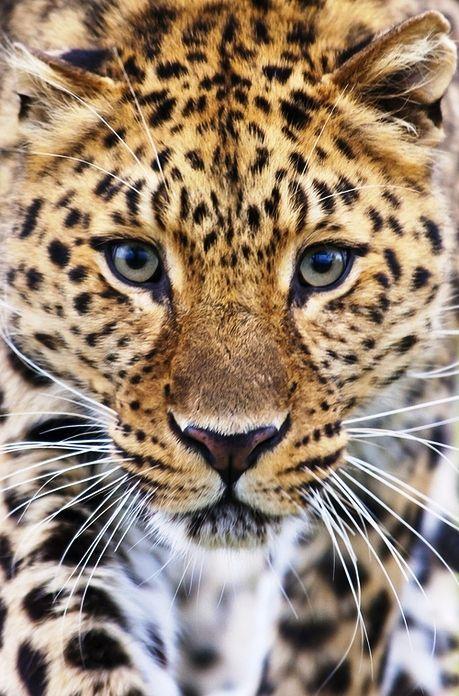 nature photography   photo:wildlife