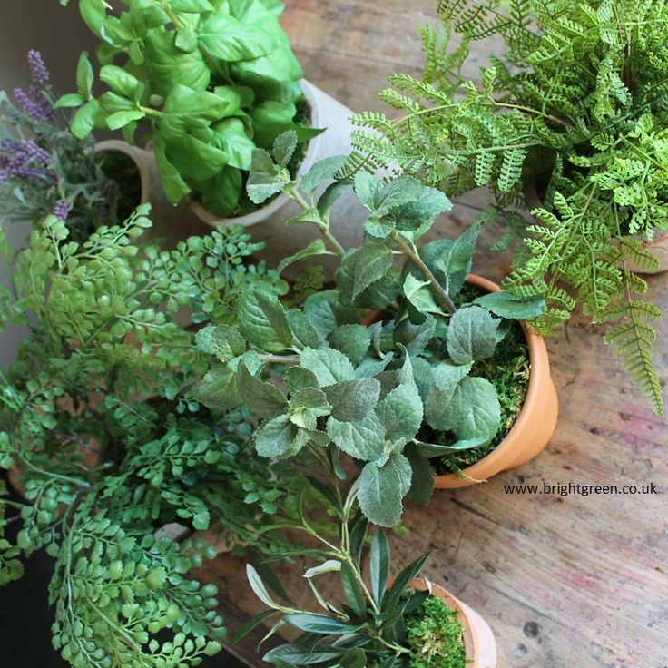 Artificial Herbs And Ferns In An Assortment Of Table Top Pots