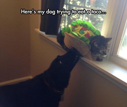 Taco Cat Is Not Amused