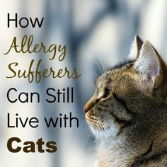 How Allergy Sufferers Can Still Live with Cats - cats have so many great mental benefits, it's a shame to avoid them just because of allergies...but it's totally possible!  Here are some tricks of the trade :)