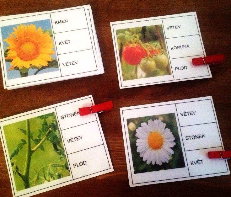 Přírodopis, části rostlin - úkol s kolíčky