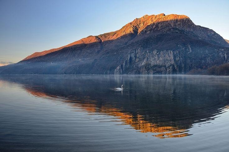Swan lake suite