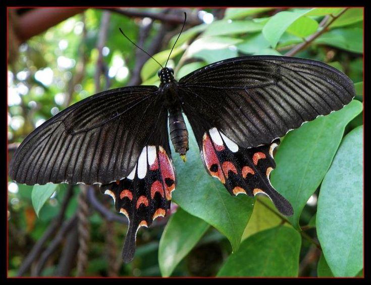 Asian butterflies thai tiny