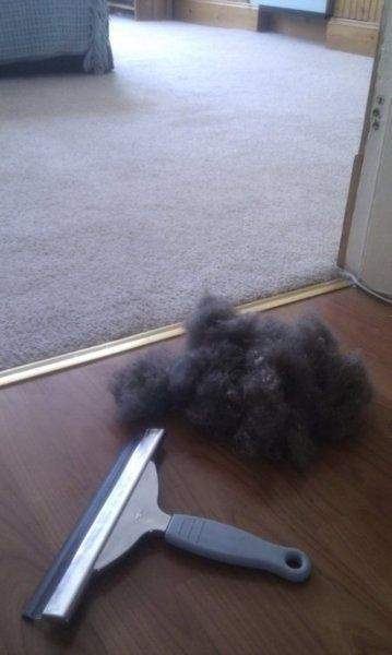 Remove pet hair from furniture and carpets with a squeegee.