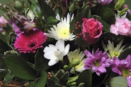 Cheapest flowers for every month of the year! This will come in handy!